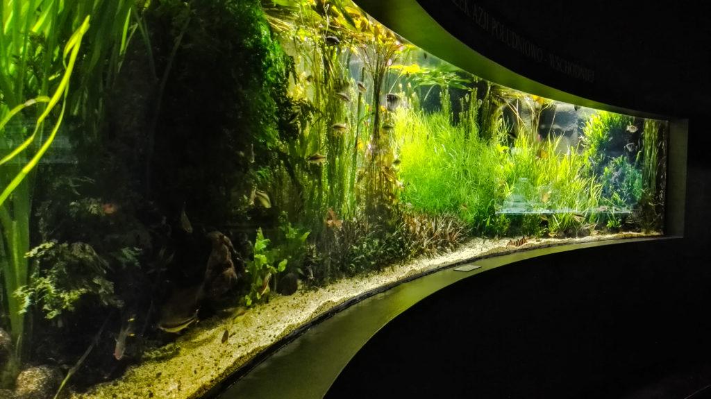 palmiarnia gliwice akwarium
