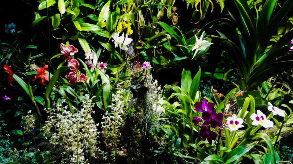 palmiarnia gliwice kwiat