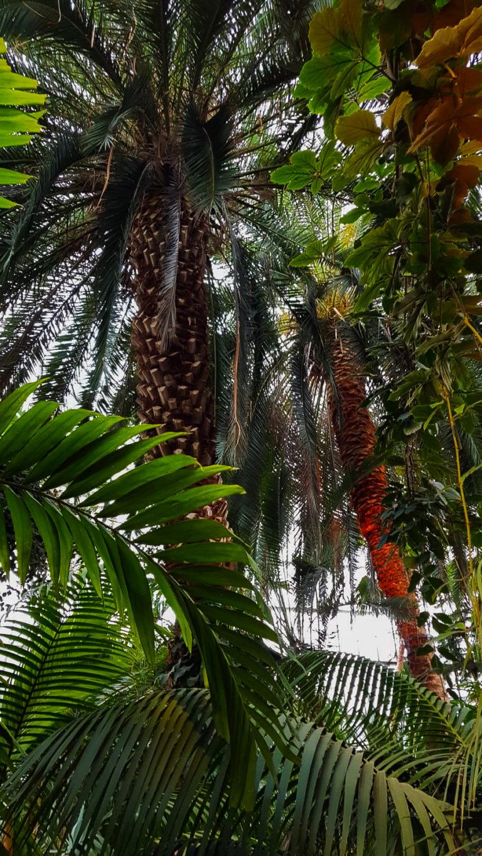 palmiarnia gliwice palmy