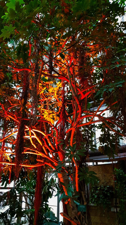 palmiarnia gliwice drzewo